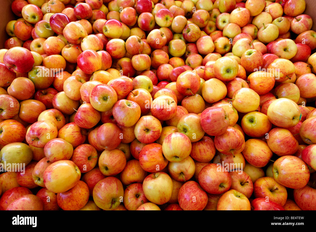 Fresh apples at market - Stock Image