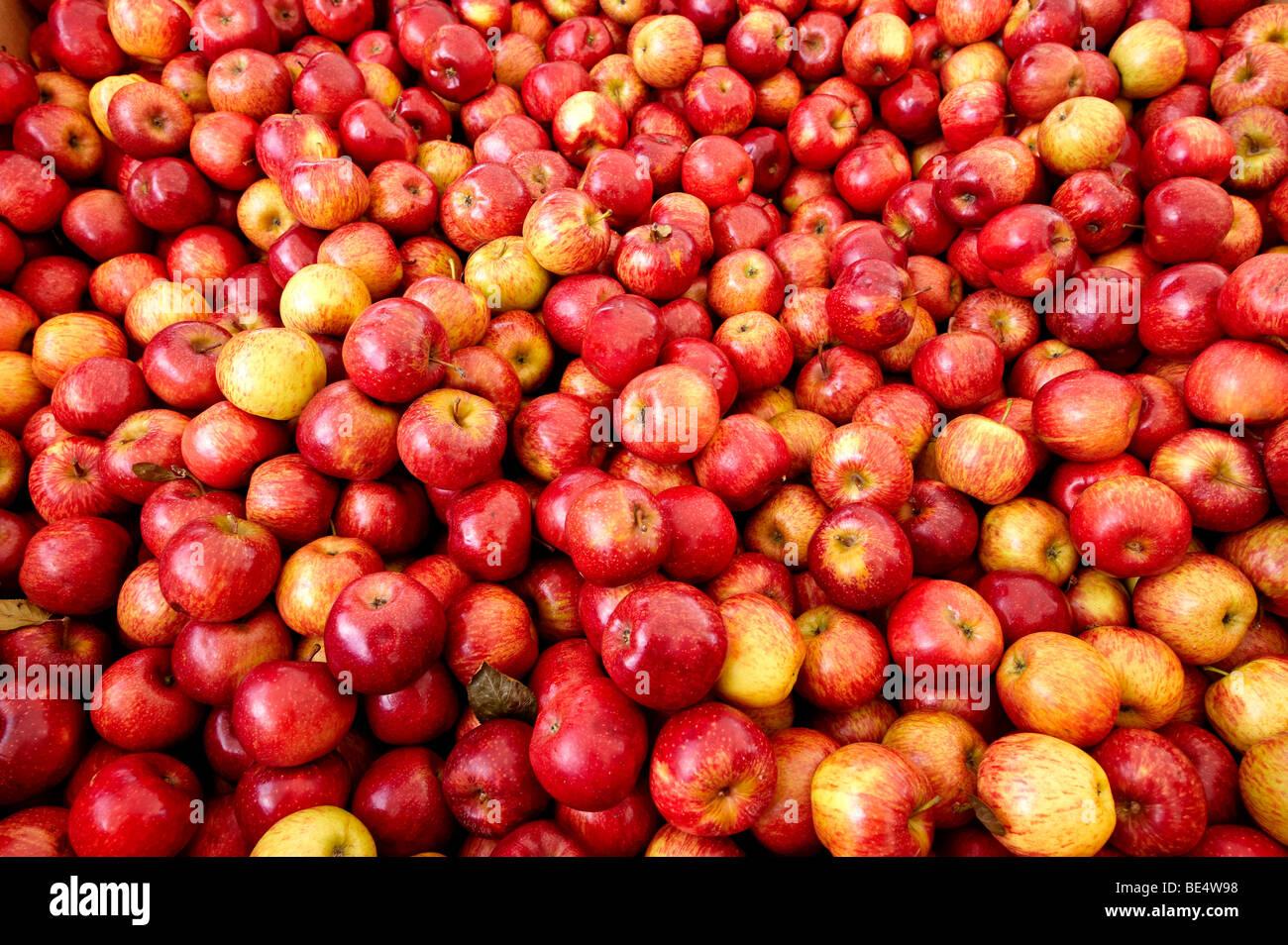 Fresh apples - Stock Image