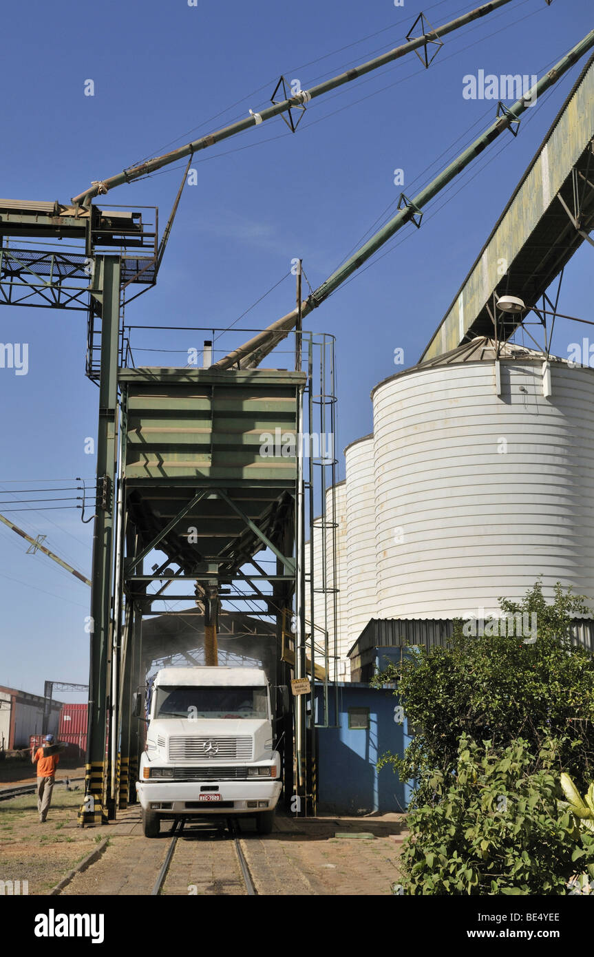Loading a truck with soy beans from silos, Uberlandia, Minas Gerais, Brazil, South America - Stock Image