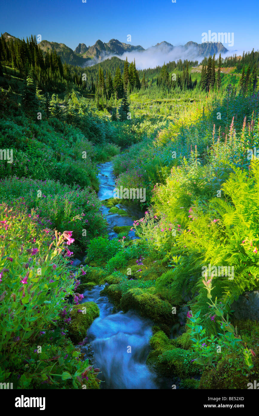 Paradise Creek in Mount Rainier National Park - Stock Image
