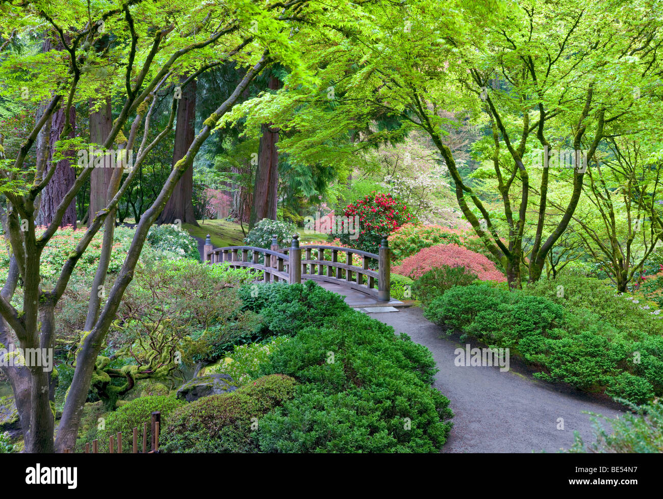 Bridge and early spring growth. Portland Japanese Gardens, Oregon. - Stock Image
