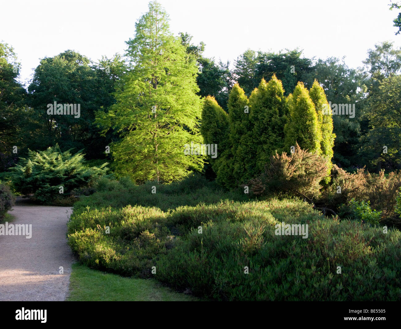 Rays of the setting sun strike trees and plant beds in the Isabella Plantation. Richmond Park. UK. - Stock Image