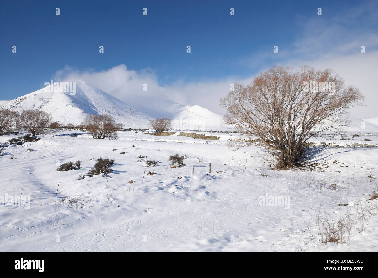 Farmland, Willow Trees, and Mt Burgess in Winter, Mackenzie Country, Canterbury, South Island, New Zealand - Stock Image