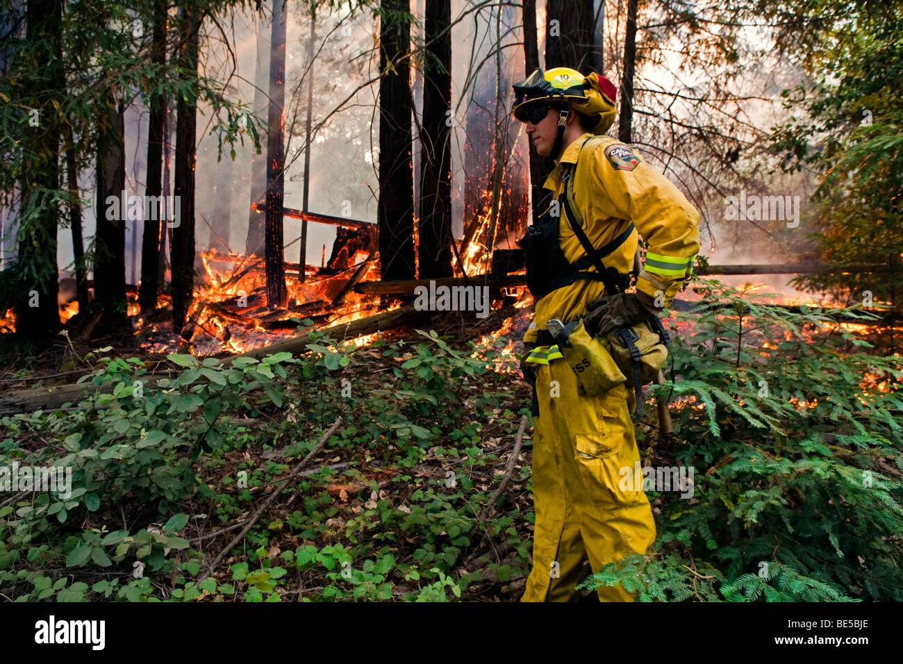 Wildland firefighters at California Lockheed wildfire in Santa Cruz Mountains. CALFIRE/CDF - Stock Image