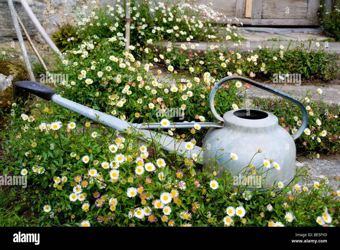 Galvanized Watering Can - Stock Image