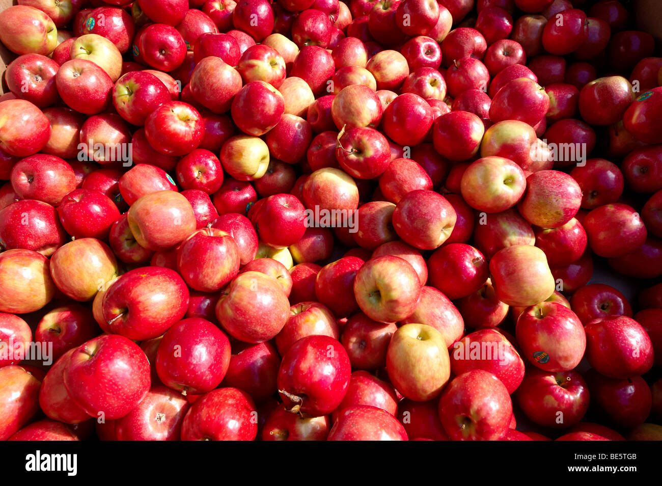 Fresh apples at market - Stock Image