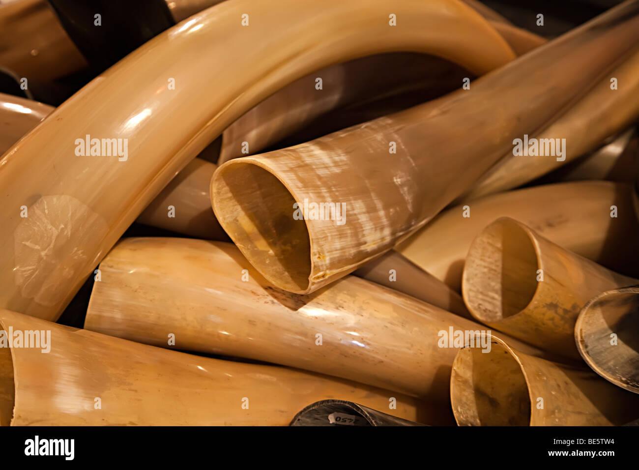 Animal horn on sale in tourist craft shop Palma Mallorca Spain - Stock Image
