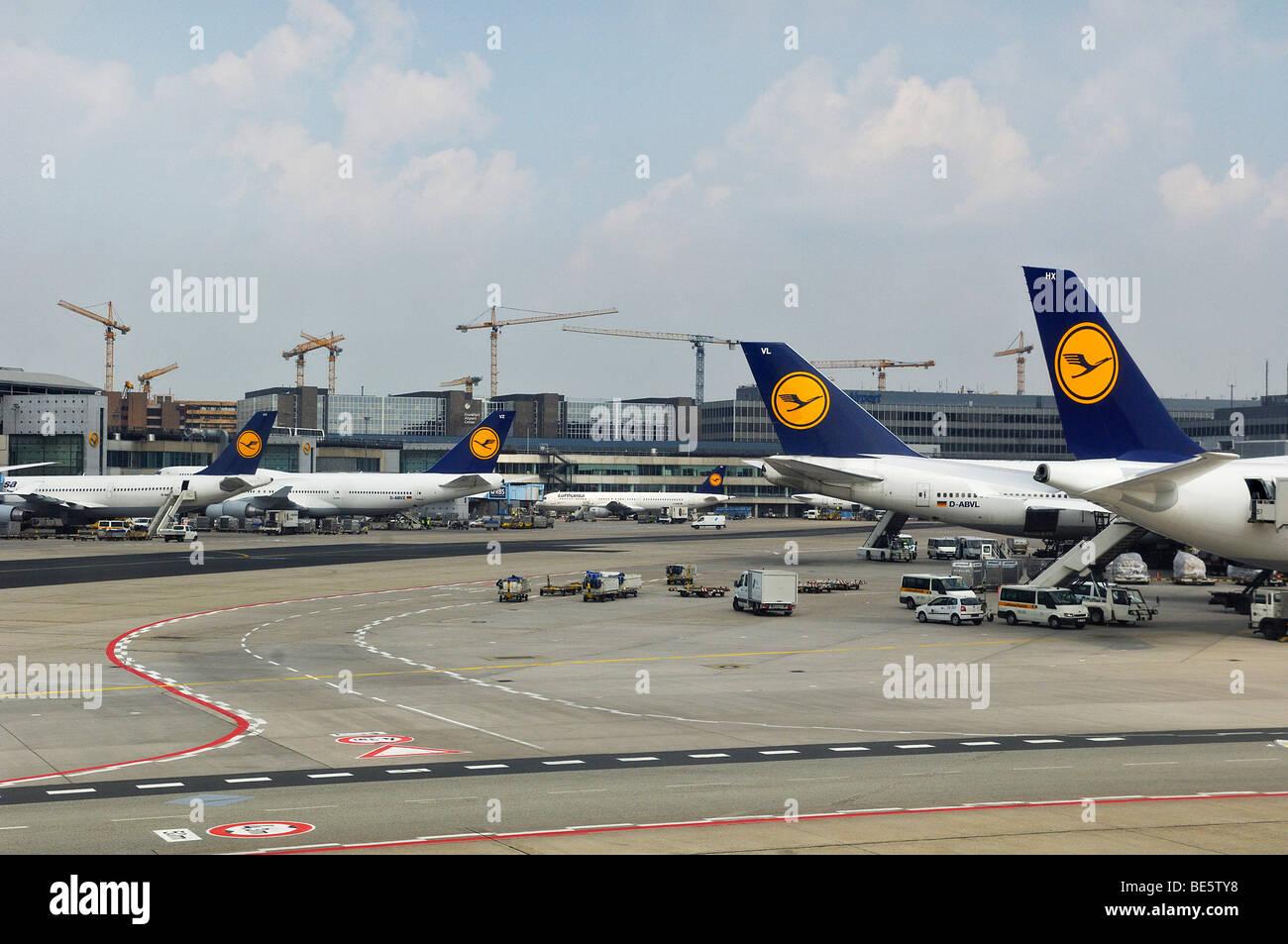 Several Lufthansa planes, Frankfurt Airport, Hesse, Germany, Europe - Stock Image