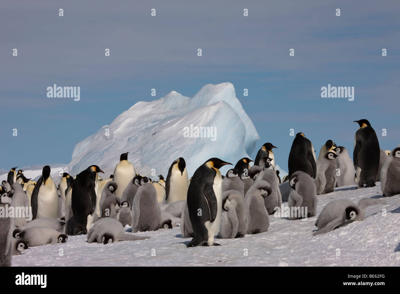 Breeding colony of Emperor Penguins at Snow Hill Island in Antarctica - Stock Image