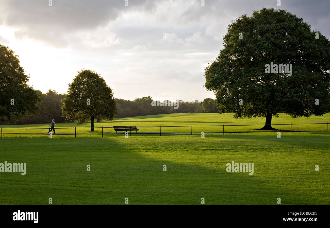 Jogging through the park at sunset. A young woman jogs though a lush green freshly mowed park with the low sun casting Stock Photo