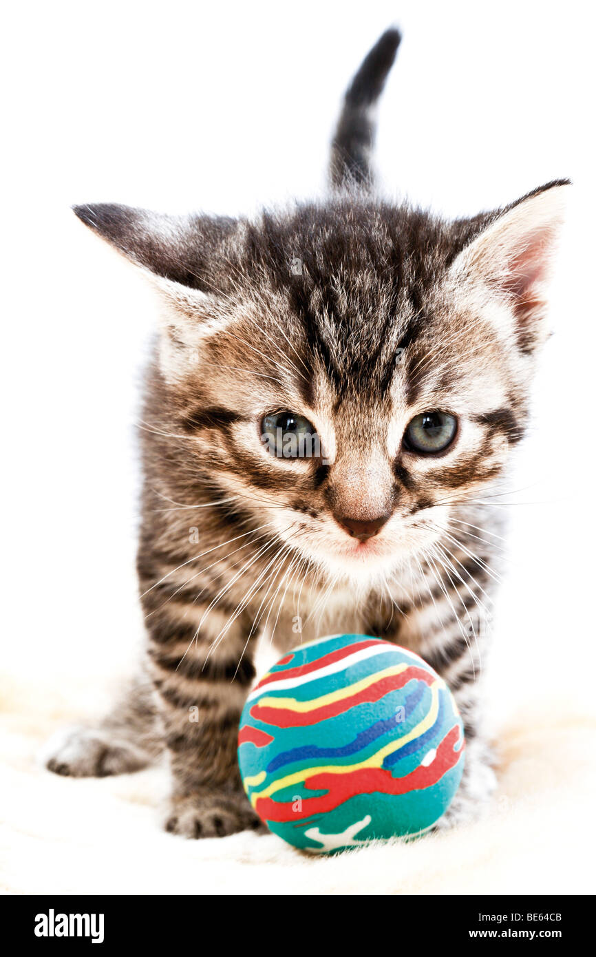 Kitten playing with a rubber ball, 4 weeks old - Stock Image
