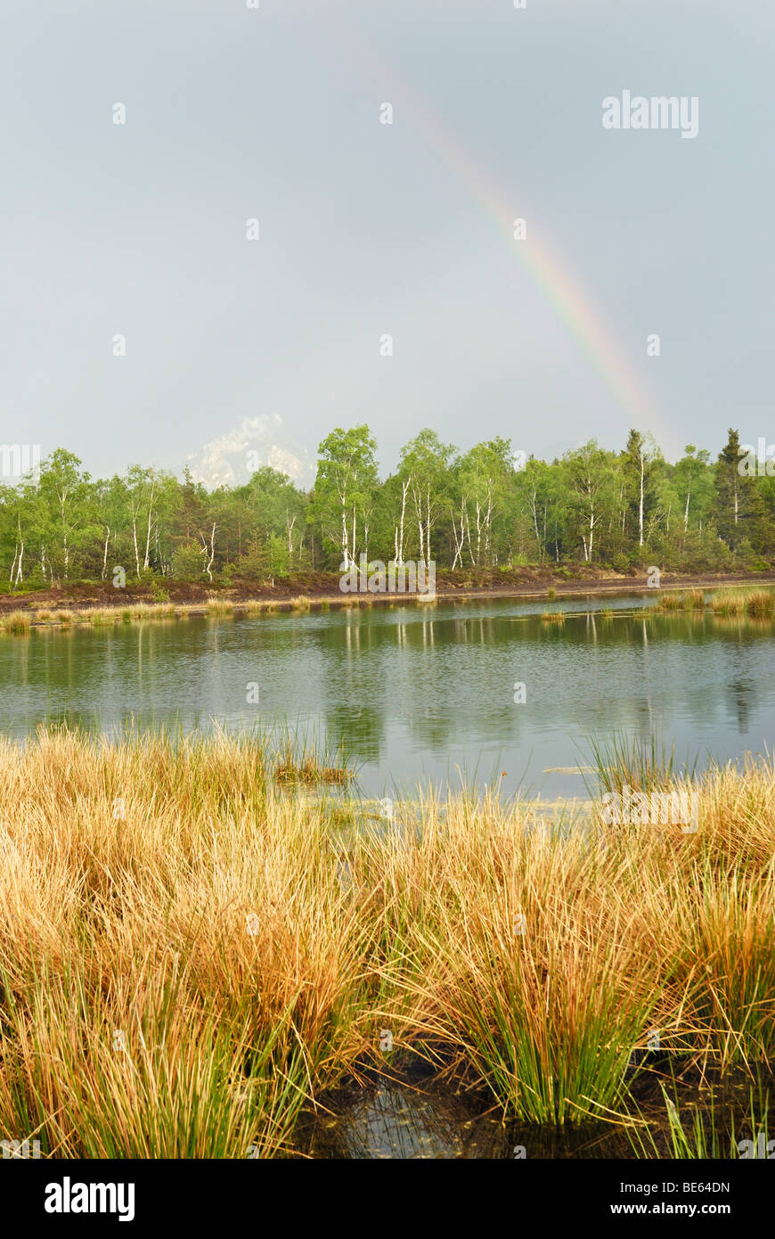 Passing thunderstorm with rainbows over a pond with Common Club-rush (Schoenoplectus lacustris) in the moors in - Stock Image