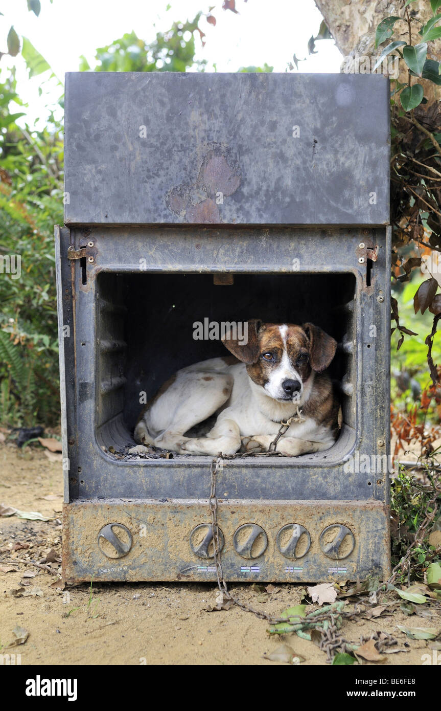 Old gas stove with a dog as a doghouse, Brazil, South America - Stock Image