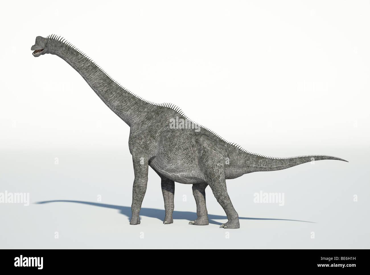 Brachiosaurus walking Stock Photo
