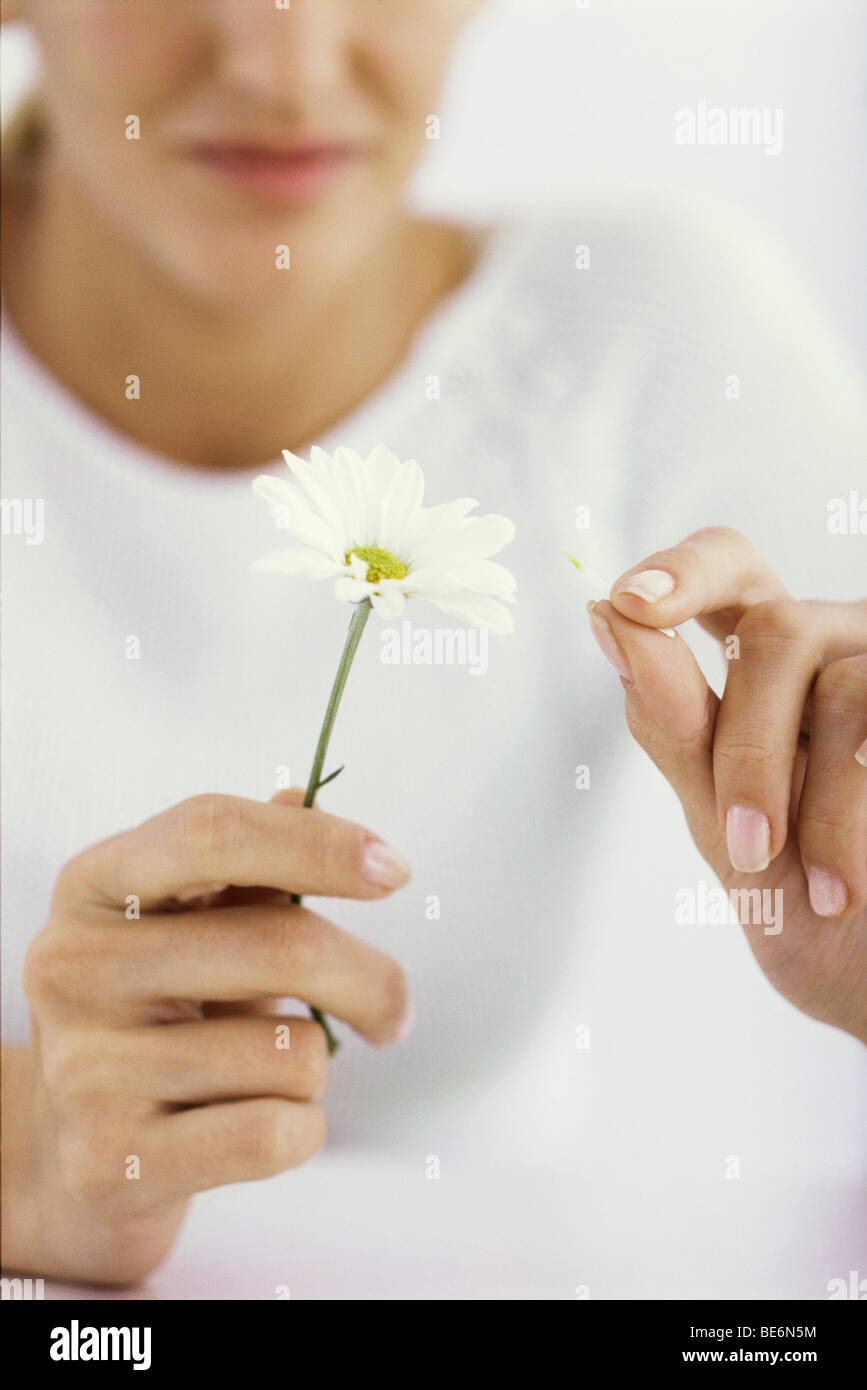Woman picking petals off daisy, cropped - Stock Image