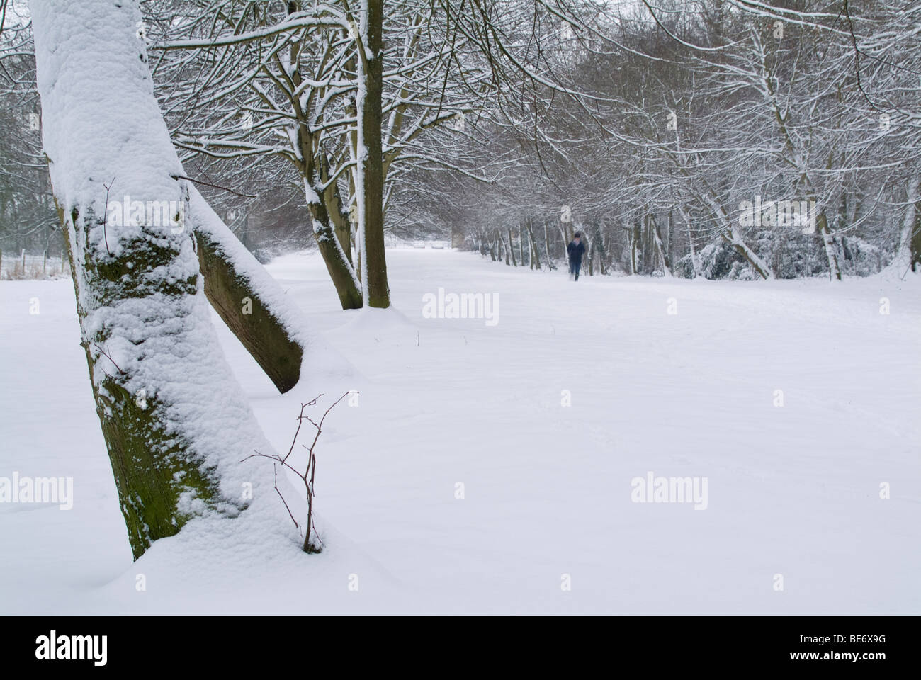 A winter walker trudging along a tree lined avenue in winter, after a heavy snow fall. - Stock Image