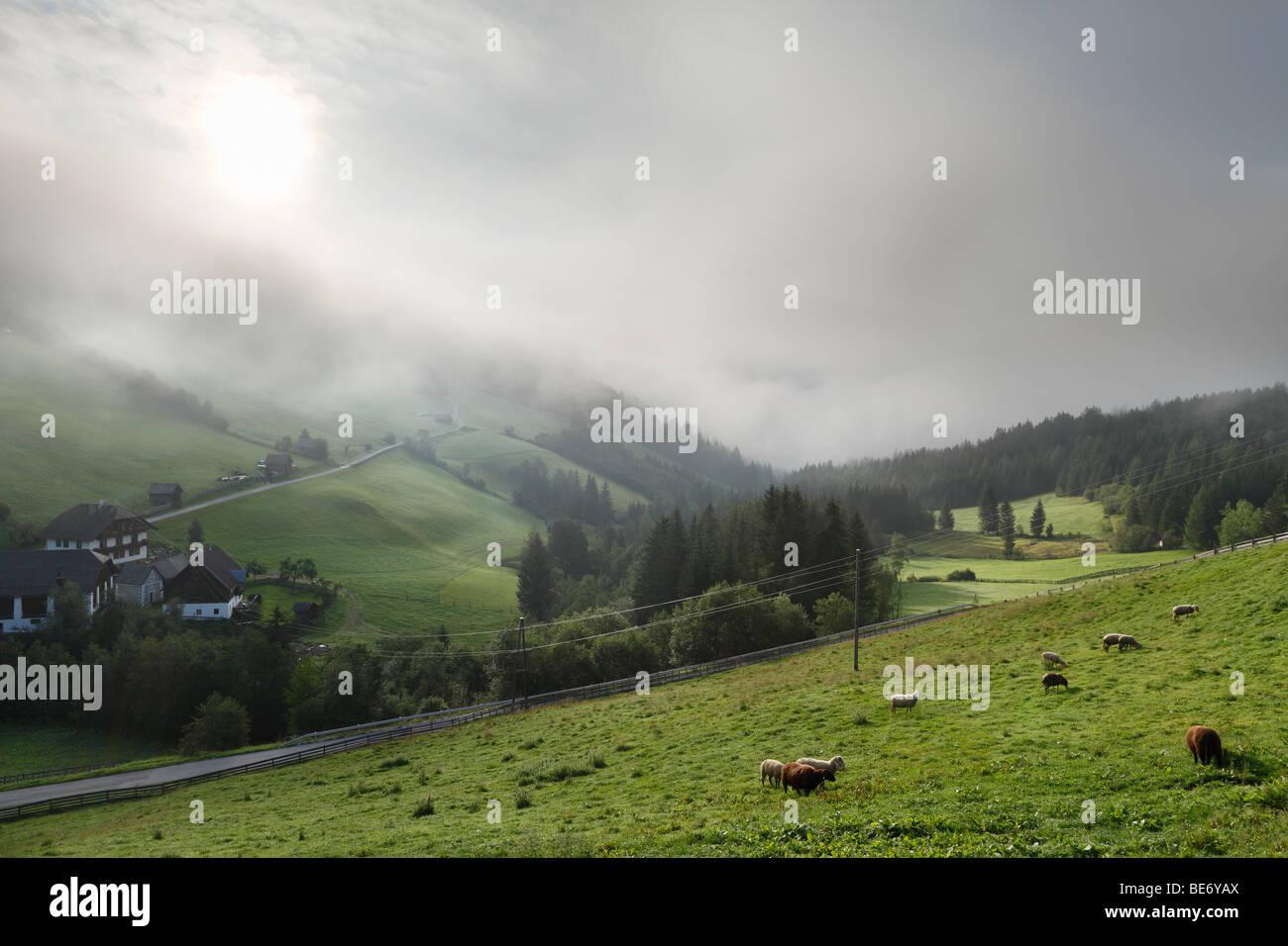 Morning fog near Tamsweg, Lungau, Salzburg state, Salzburg, Austria, Europe Stock Photo
