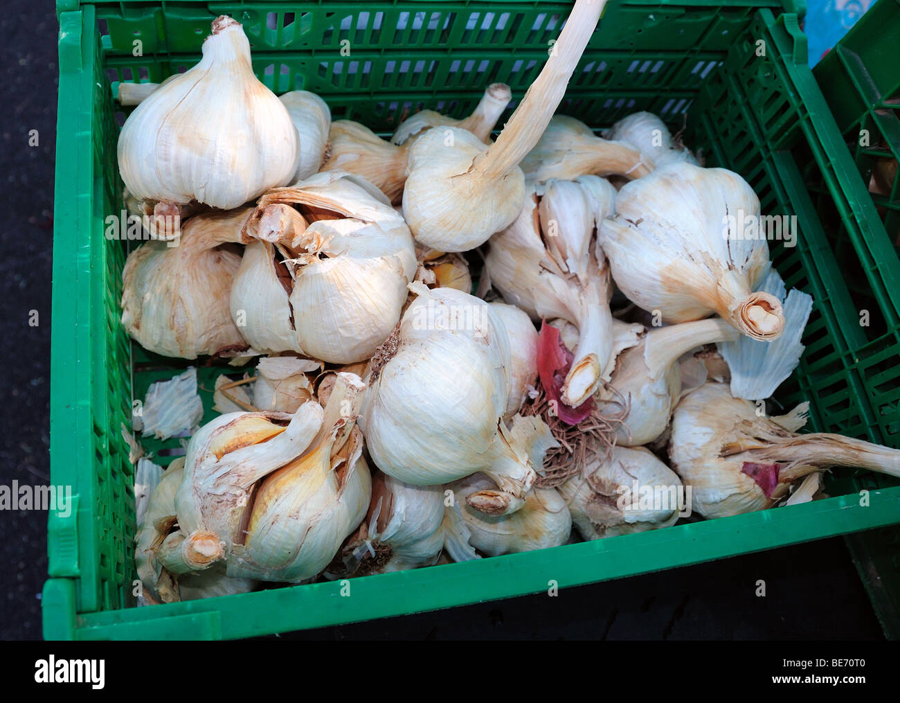 Organic elephant garlic Farmers market at St. Philip's Plaza, Tucson, Arizona, USA. - Stock Image