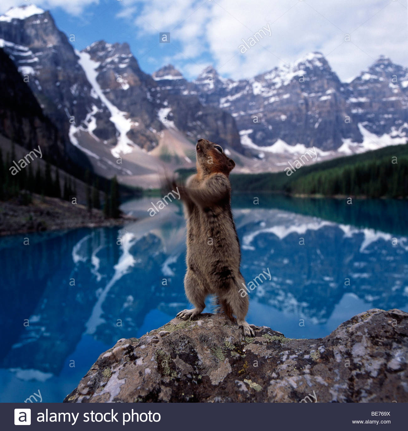 Squirrel standing on a rock Stock Photo