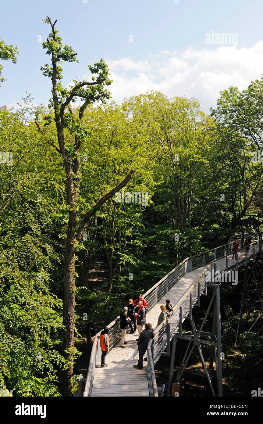 Baumkronenpfad tree top walk in the Hainich National Park, Thuringia, Germany, Europe - Stock Image
