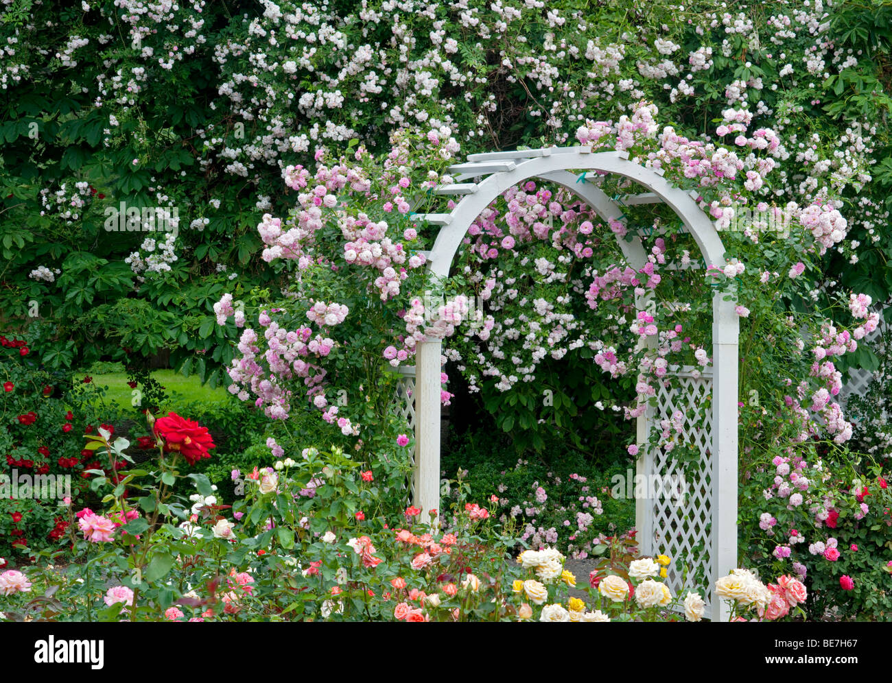 Arch with climbing roses. Heirloom Gardens. St. Paul, Oregon - Stock Image
