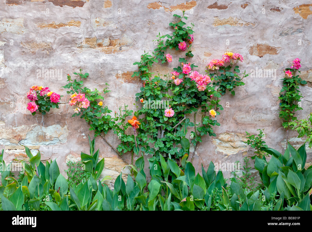 Gardens with roses at the Carmel Mission. Carmel by the Sea, California. - Stock Image
