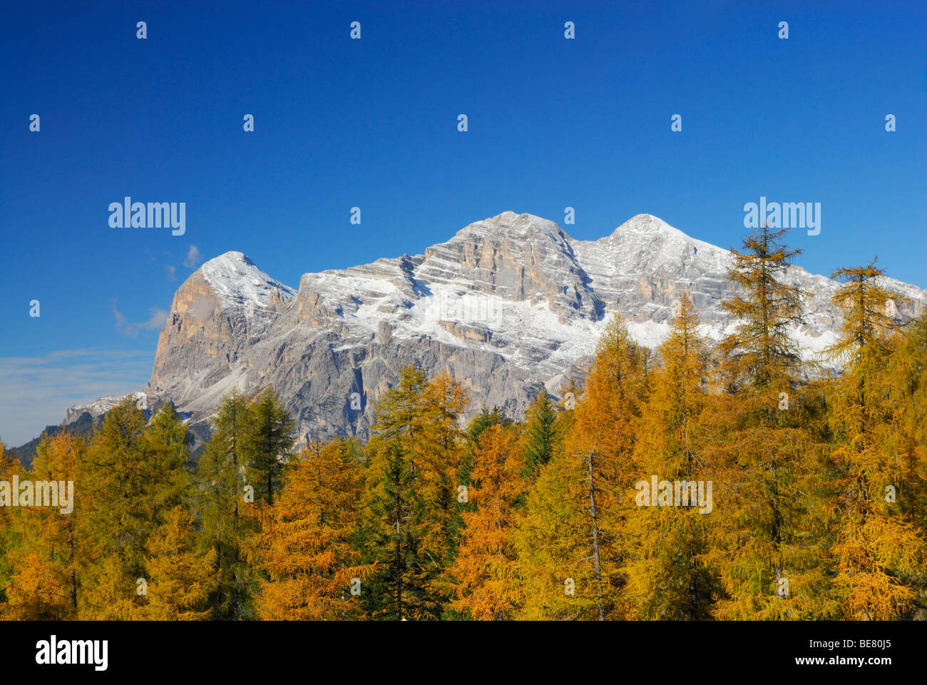 Tofana range with larches in autumn colours, Dolomites, South Tyrol, Italy Stock Photo