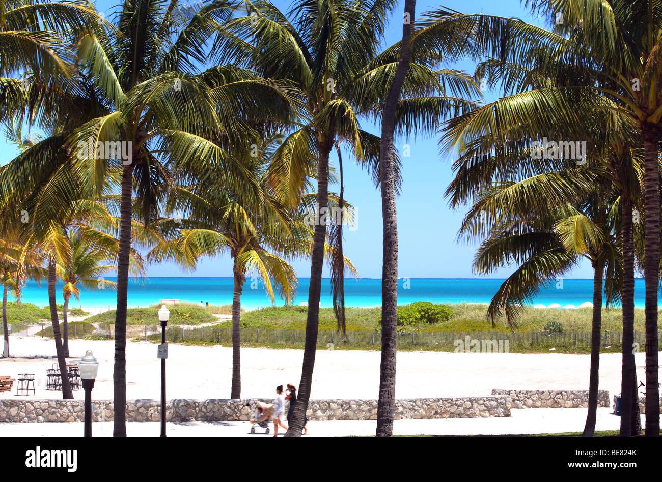 South Beach Miami Palm Trees