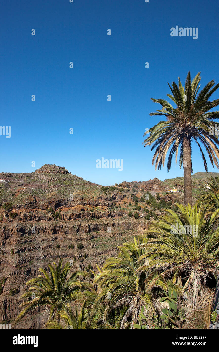 Palm trees and the Valle Gran Rey under blue sky, La Gomera, Canary Islands, Spain, Europe - Stock Image