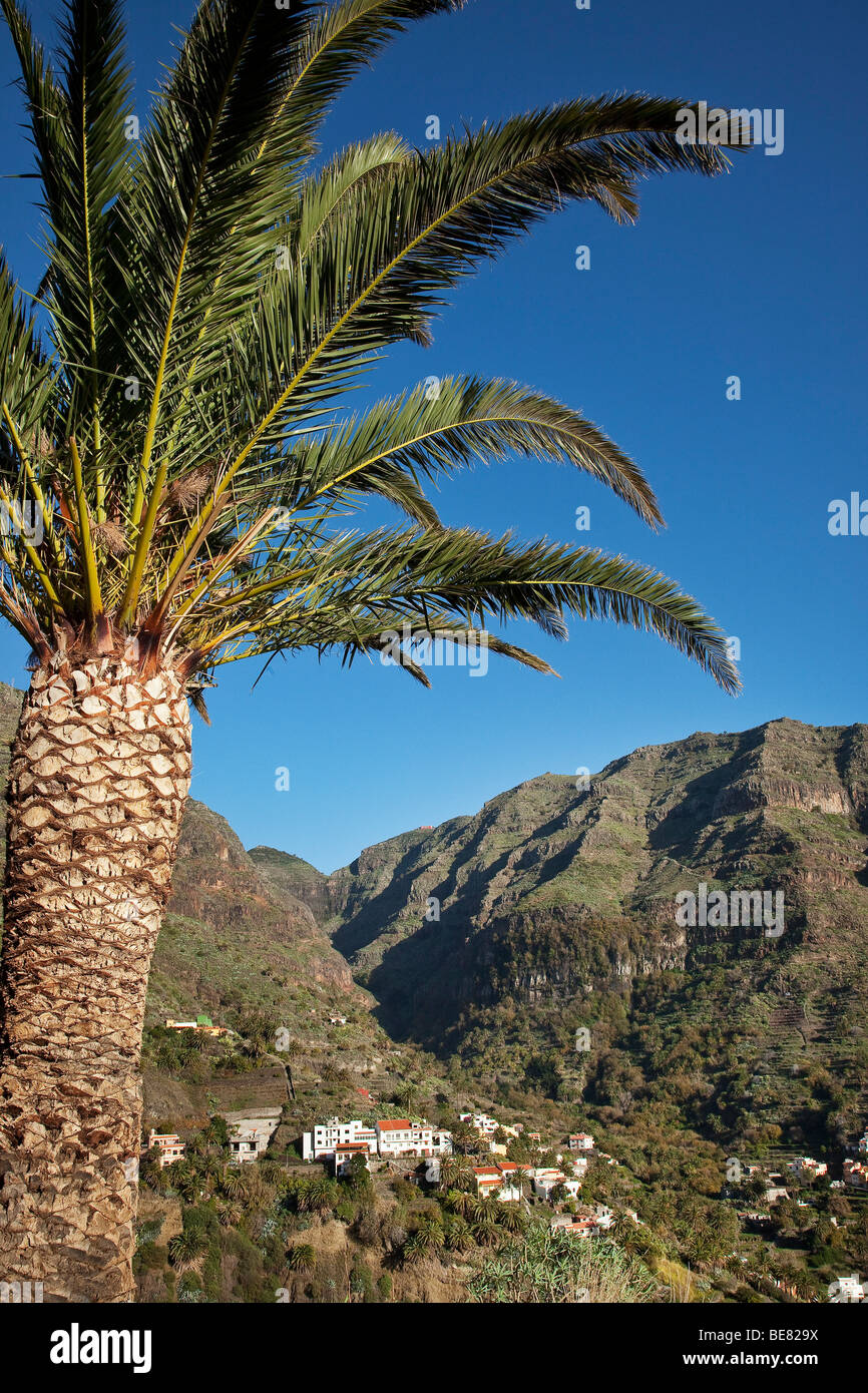 Palm tree and Valle Gran Rey under blue sky, La Gomera, Canary Islands, Spain, Europe - Stock Image