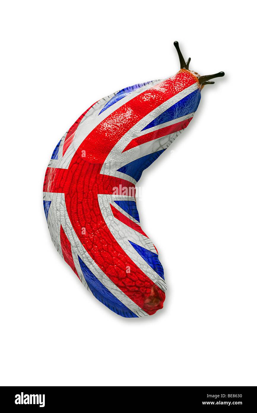 A British land slug (photomontage). Limace terrestre britannique (photomontage). Stock Photo