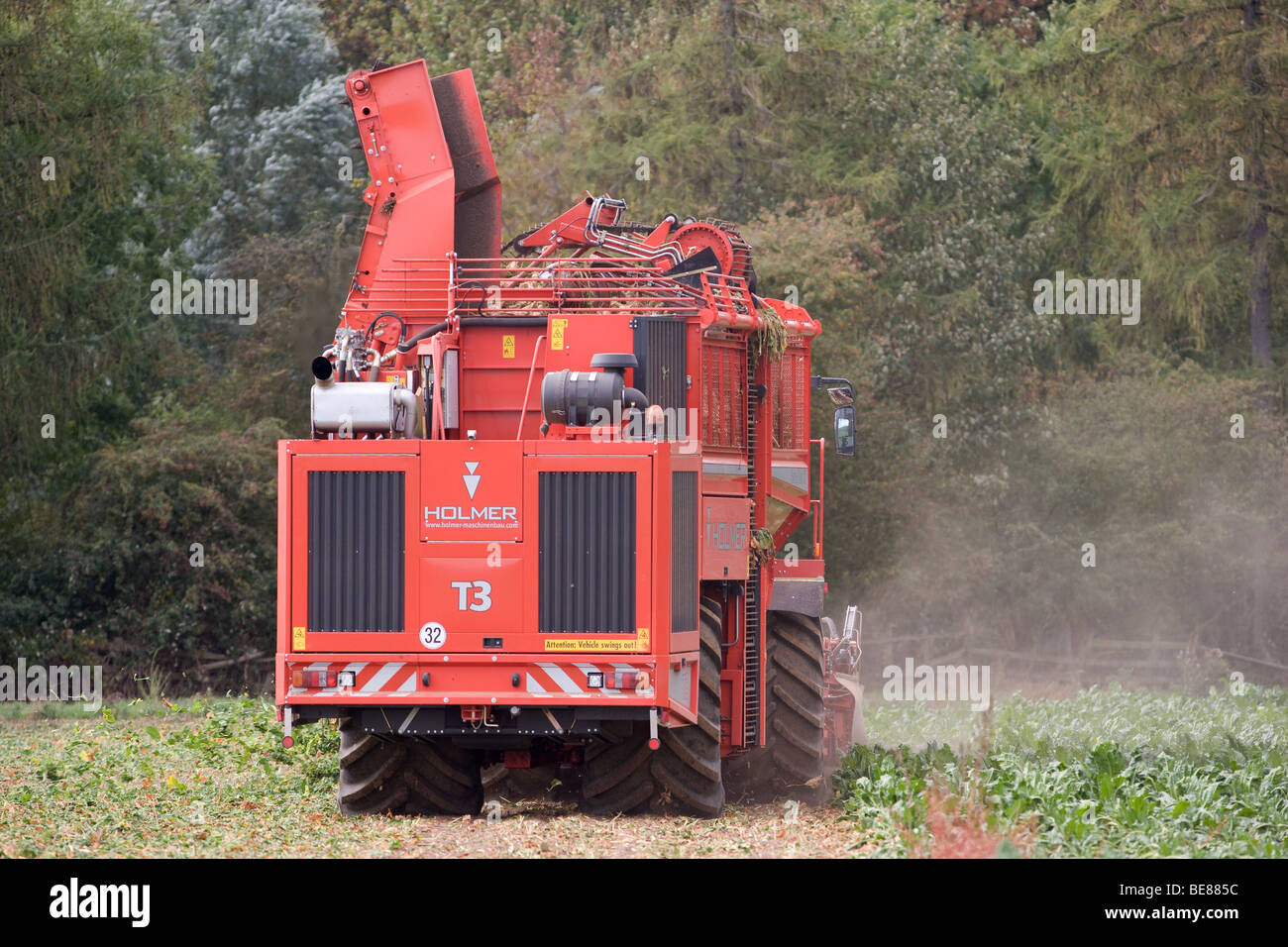 Harvesting Sugar Beet - Stock Image