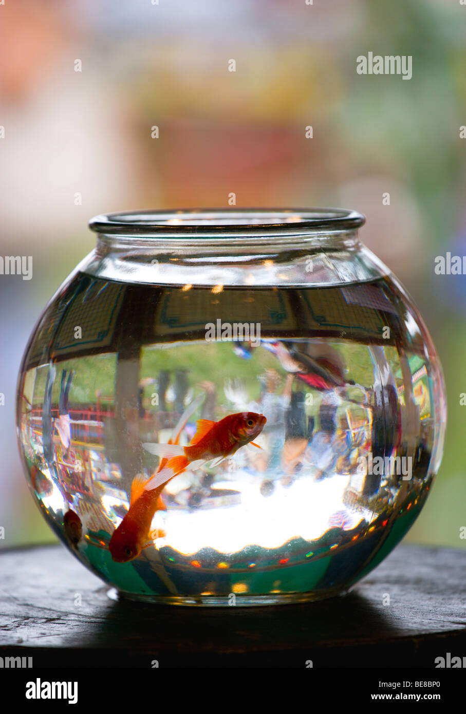ENGLAND West Sussex Findon Village Sheep Fair Goldfish in glass bowl with refraction image of people inverted. - Stock Image