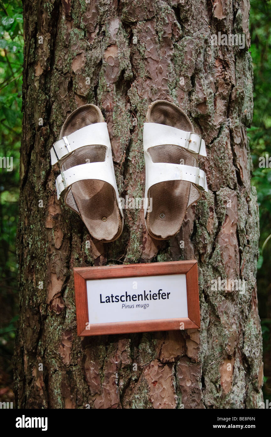Health slippers and a shield bearing the word Latschenkiefer, German for mountain pine on the trunk of a Mountain - Stock Image