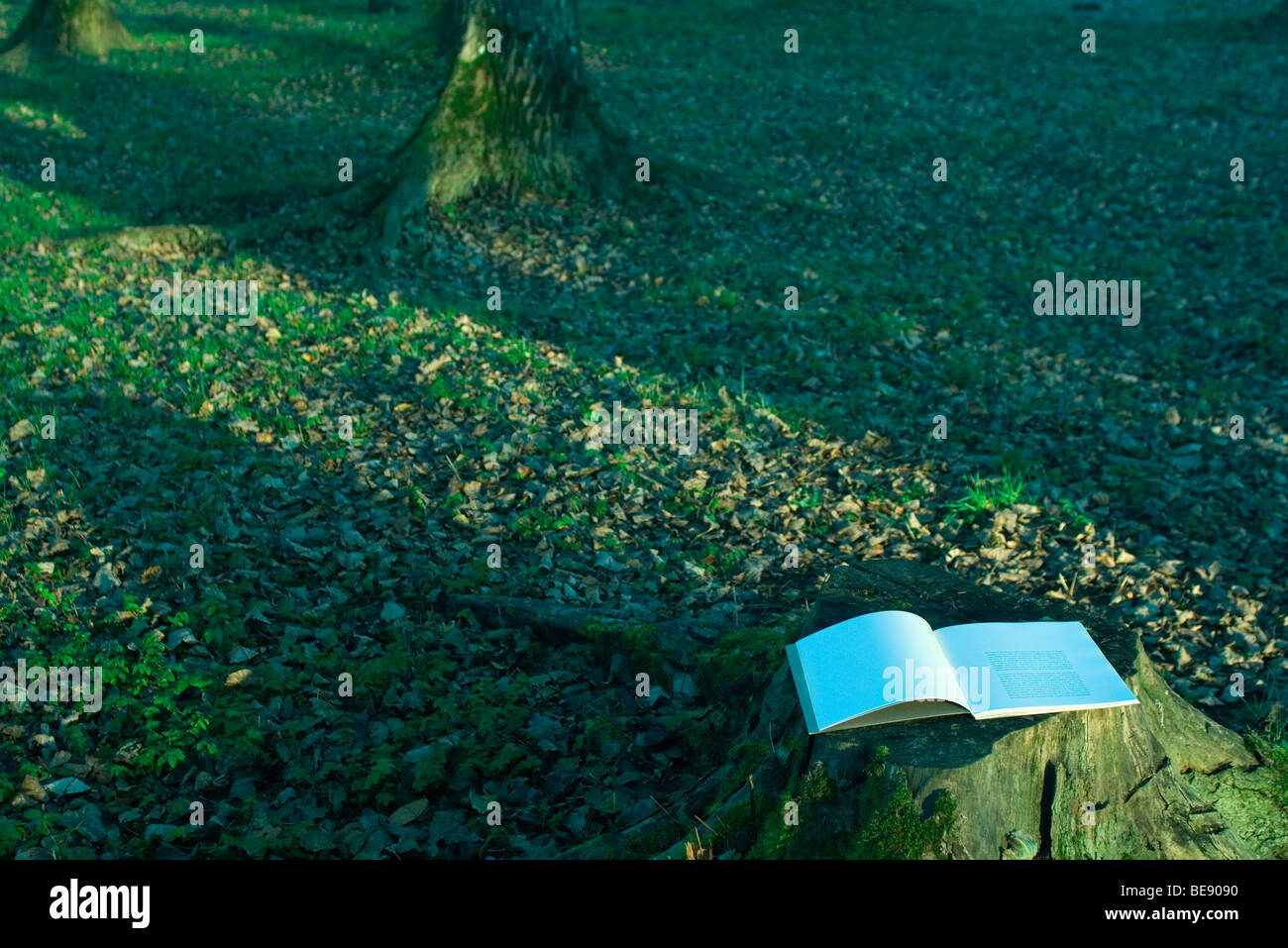 Open book lying on tree stump - Stock Image