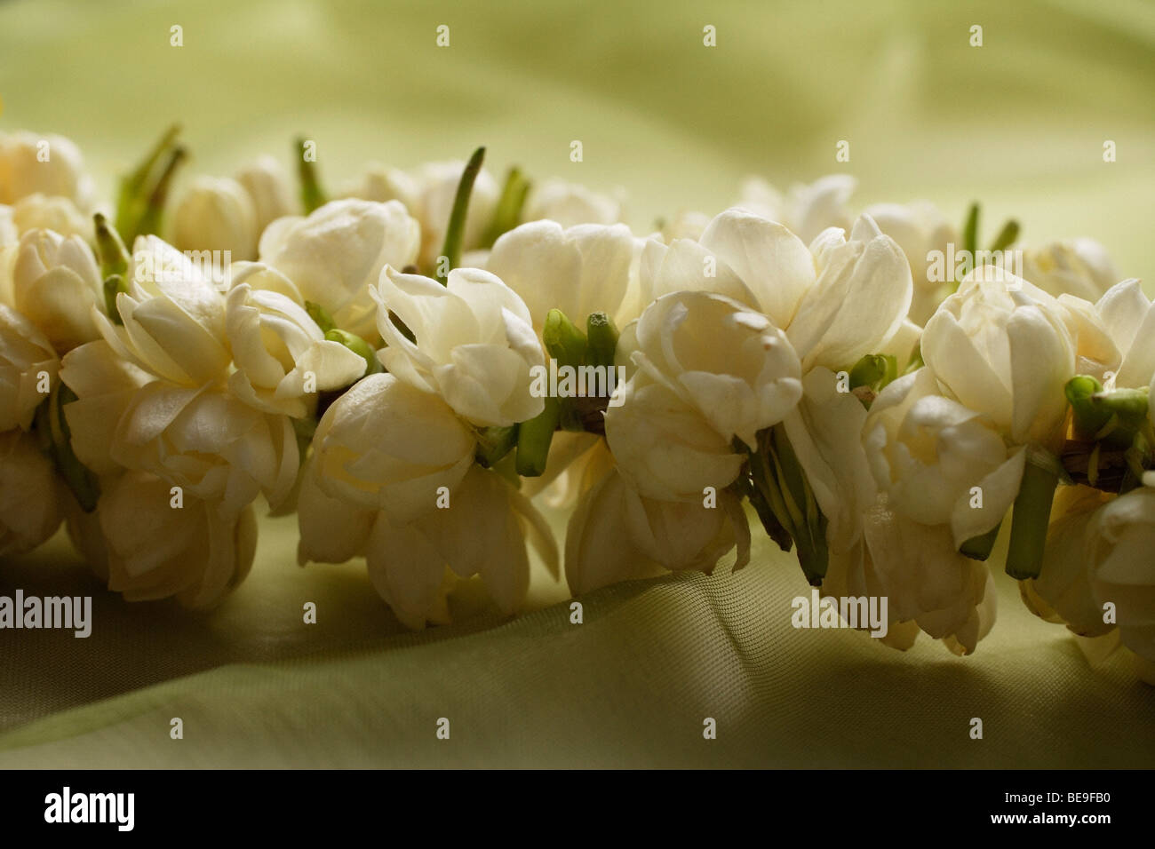 Jasmine Flower Garland Stock Photos Jasmine Flower Garland Stock