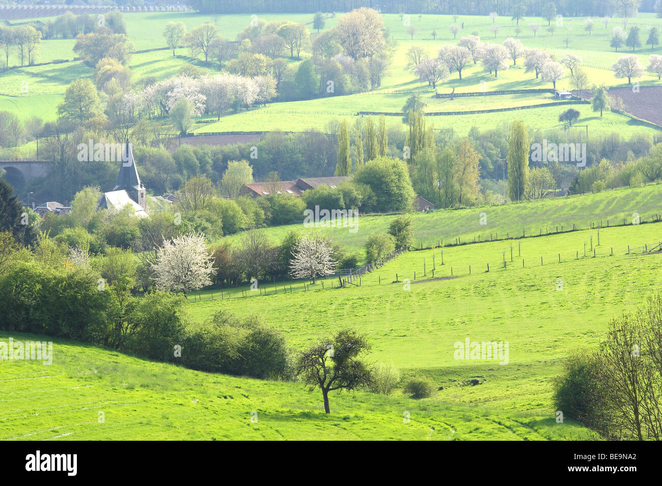 Bocagelandschap met hagen en bomen, Voeren, Belgi Bocage landscape with hedges and trees, Voeren, Belgium Stock Photo