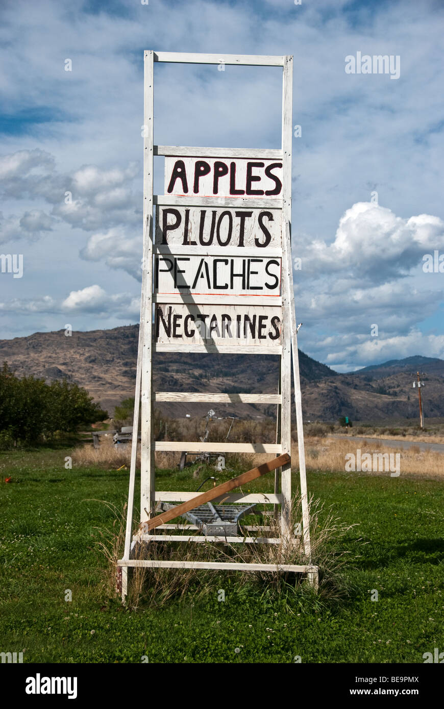 old weathered white painted wooden apple picking ladder used as fruit stand sign in Okanagan Valley landscape Washington Stock Photo