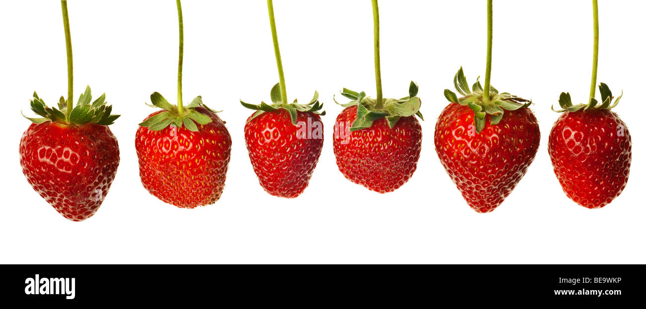 ripe red strawberries with stems and leaves isolated on white background - Stock Image