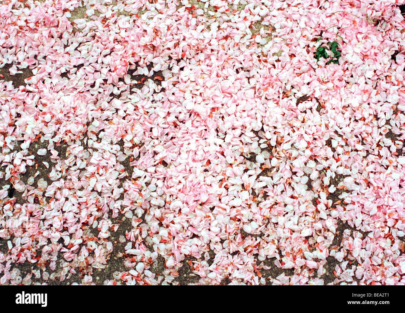 Large Pile Pink Flower Petals Stock Photos Large Pile Pink Flower