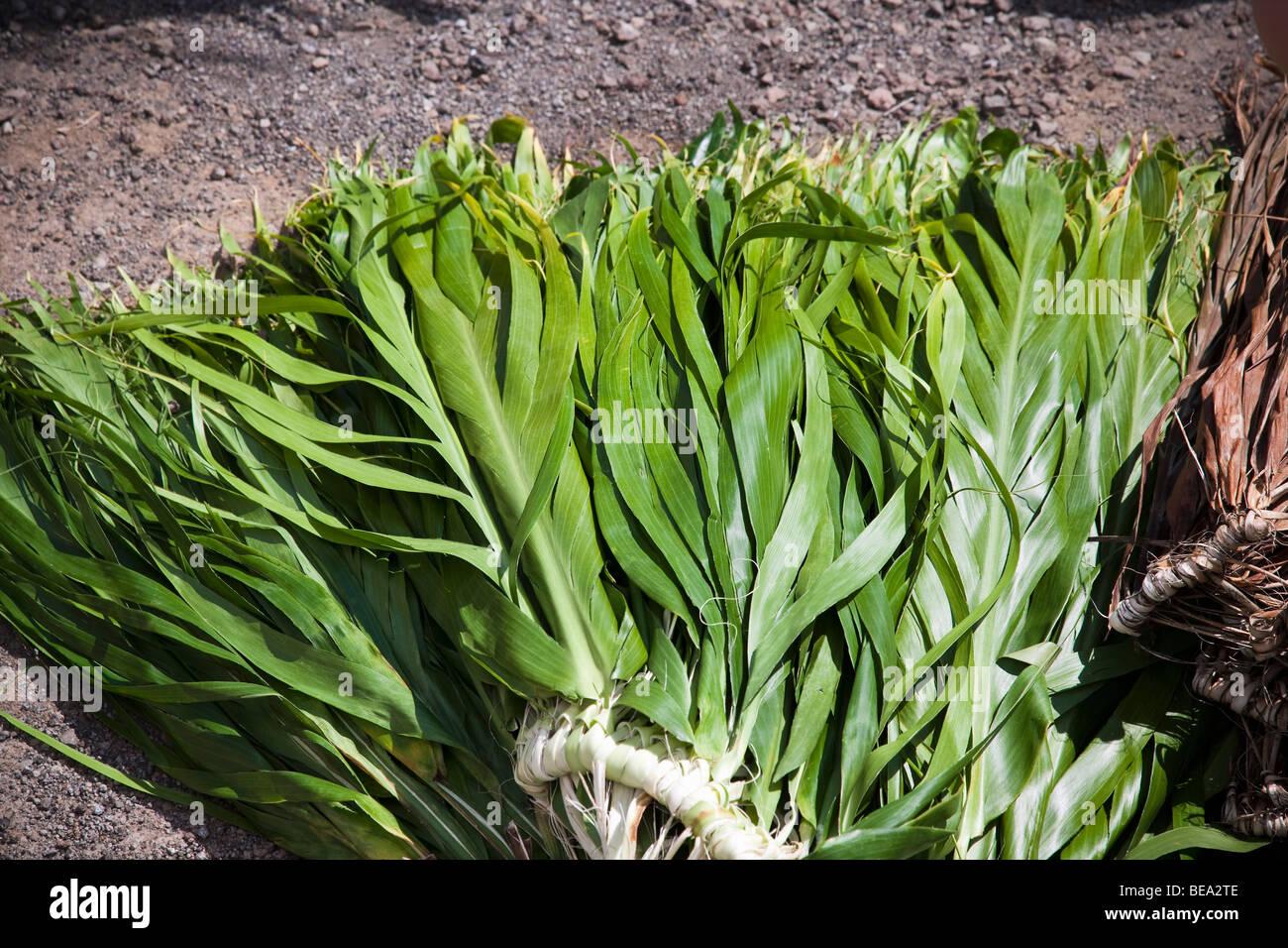 Ti leaf hula skirt - Stock Image