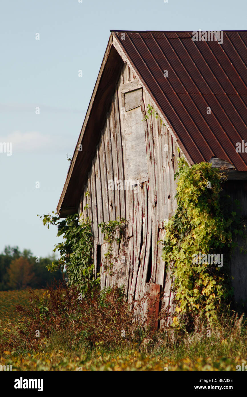 Abandoned Decrepit Equipment Shed on Southwestern Ontario Farmland - Stock Image
