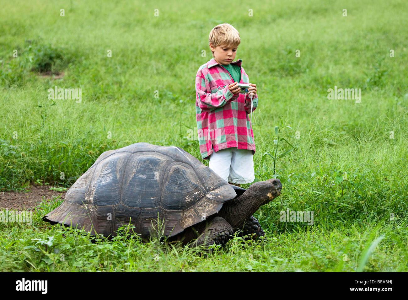A young boy gets ready to snap a photo of a Galapagos giant tortoise, Geochelone elephantopus, Santa Cruz Island, - Stock Image