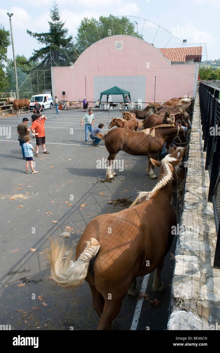 Draught horses waiting for the beginning of a show (France). Chevaux de trait attendant le début d'un Concours - Stock Image