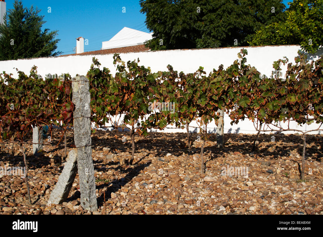 adega jose de sousa rosado fernandes alentejo portugal - Stock Image