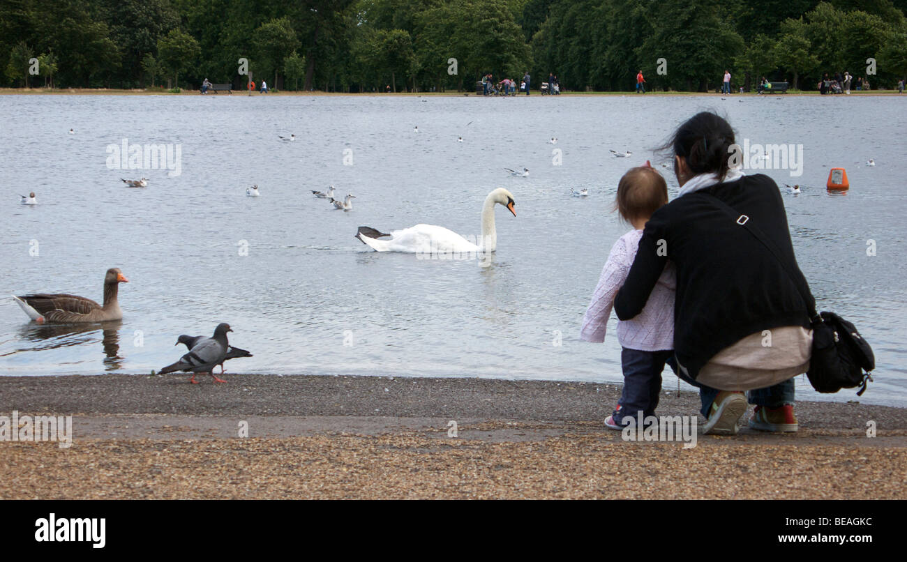 Mother and toddler standing at the boating lake in Hyde Park watching the swans and ducks. London, England - Stock Image
