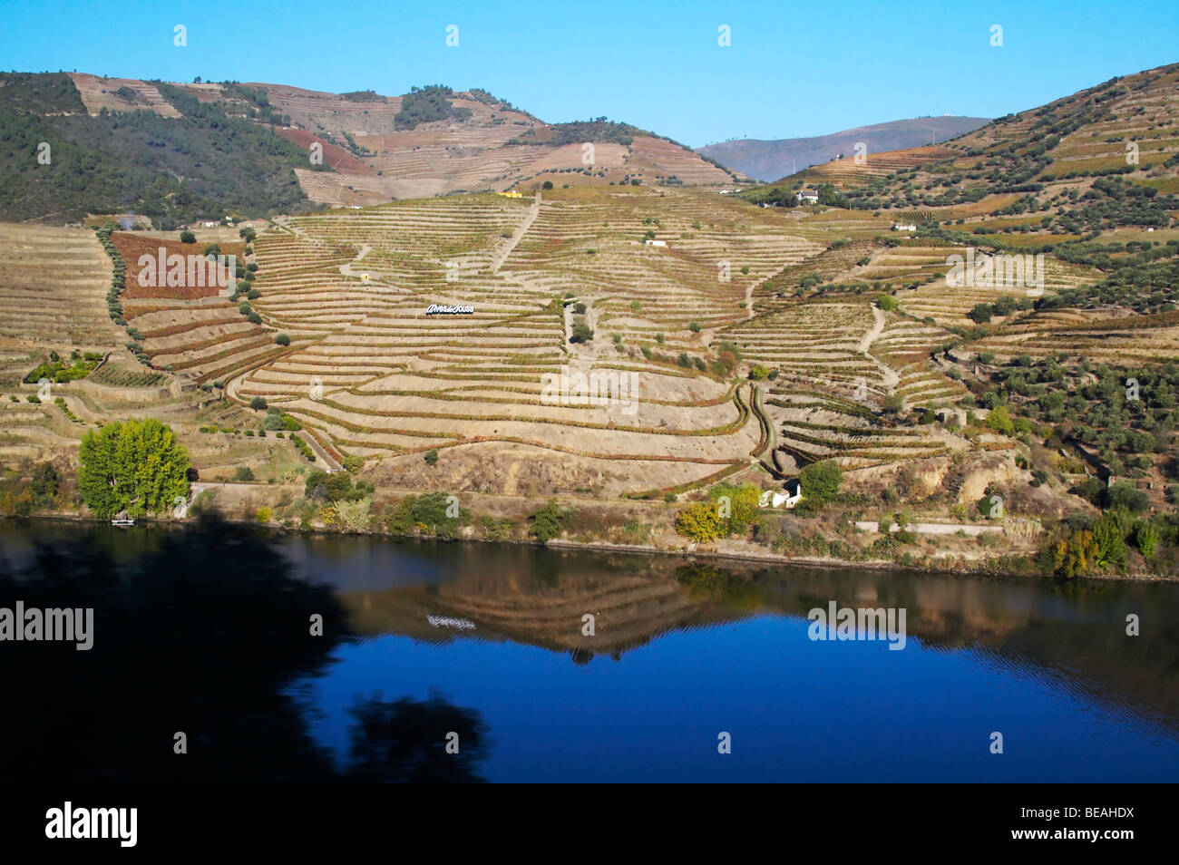 vineyards alves de sousa douro portugal - Stock Image