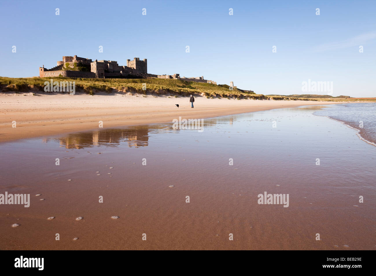 View along quiet sandy beach with Bamburgh Castle reflected in wet sand on foreshore with a person walking a dog. Stock Photo