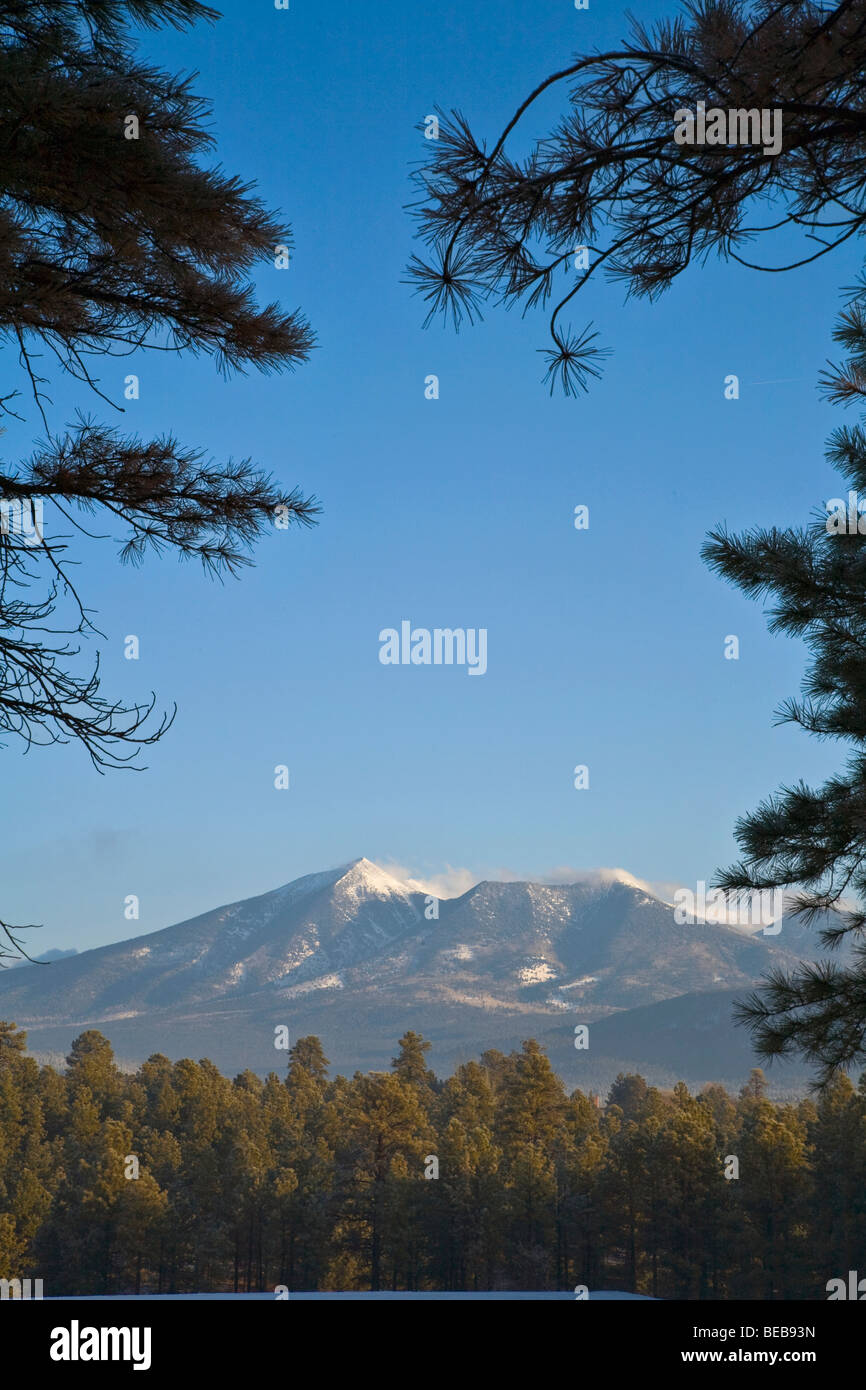 San Francisco Peaks on winter morning, viewed from NAU campus, Flagstaff, Arizona USA - Stock Image