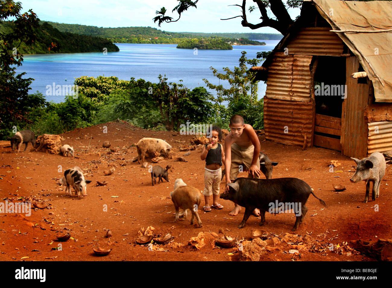 Pig Farm Vavau Tonga - Stock Image